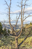 Målad kulleJohn Day Fossil Beds National monument, Oregon Arkivfoto