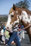 målad ponny Royaltyfri Fotografi