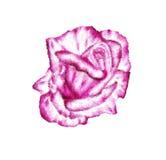 Målad rosblomma på exponeringsglas. Arkivbilder