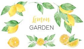 Målad samling för vattenfärg hand av citronen kan användas för utskrift och garnering royaltyfri illustrationer