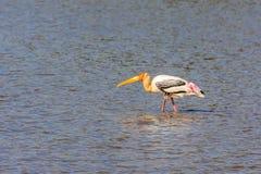 målad stork Arkivbild