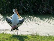 målad stork Fotografering för Bildbyråer