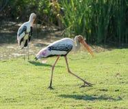 målad stork Arkivfoto