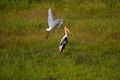 målad stork Arkivfoton