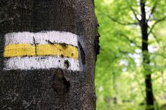 målad teckentree Royaltyfri Bild