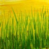 målad texturyellow för gräs grön grunge Royaltyfria Foton