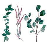 Målad uppsättning för vattenfärg hand av 3 eukalyptusfilialer royaltyfri illustrationer