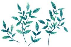 Målad vattenfärguppsättning av dekorativa gröna sidor och filialer som isoleras på vit bakgrund designelementillustrationen låter vektor illustrationer