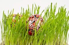 Målade easter ägg i nytt grönt gräs Arkivbilder