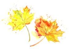 Målade gul höst avverkade sidor för vattenfärg hand royaltyfria foton
