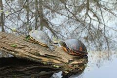 Målade sköldpaddor på en journal Royaltyfri Fotografi