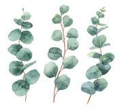 Målade vektoruppsättningen för vattenfärgen lämnar förgrena sig handen med eukalyptuns och royaltyfri illustrationer