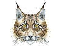 Målat dra den djura rovdjurs- lodjuret för vattenfärg Royaltyfri Fotografi