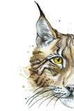 Målat dra den djura rovdjurs- lodjuret för vattenfärg Arkivfoto