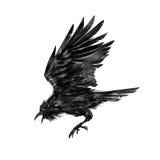 Målat flyga den korpsvarta fågeln på vit bakgrund Royaltyfria Bilder