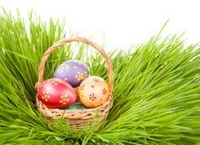 målat gräs för 2 placerade allt för easter för hinkfågelungebegreppet blommor ägg barn Ägg i en korg i gräset som isoleras på vit Royaltyfri Bild