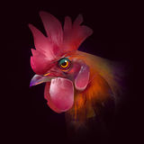 Målat huvud av en hane på svart bakgrund Royaltyfri Foto