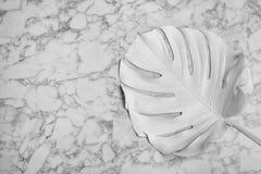 Målat tropiskt Monstera blad och utrymme för text på marmorbakgrund royaltyfri foto