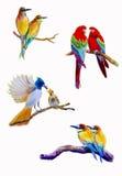 Målning för fastställd vattenfärg för fågel som original- är färgrik av parfågel Royaltyfri Fotografi