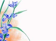 Målning för irisblommavattenfärg med vit copyspace för text Arkivfoton