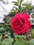 Månatliga blommor royaltyfria bilder