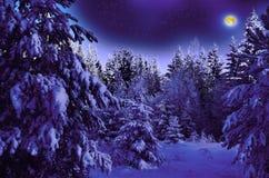 Månbelyst natt i snöig trän Fotografering för Bildbyråer