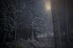 Måne över dimmiga trän Royaltyfria Bilder