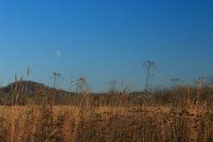 Måne över fält Arkivbild