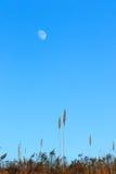 Måne över fält Royaltyfri Foto