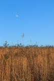 Måne över fält Royaltyfria Foton