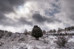 Måne över snöig skog Arkivbilder