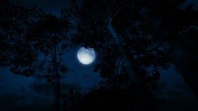 Måne bak högväxta träd på stormig natt