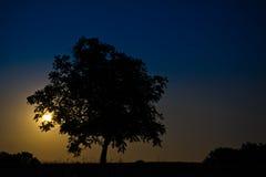 Måne bak träd Royaltyfria Bilder