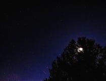 Måne bak träd i natthimmel i zaragoza Royaltyfri Bild