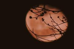 Måne bak träden Arkivfoto