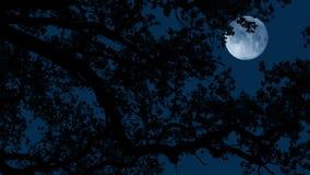Måne bak trädfilialer på Windy Night
