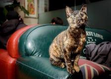 Måne formade kattögon i en vardagsrum arkivfoto