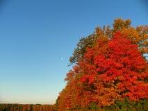 Måne i eftermiddagen bland tree& x27; oavkortade nedgångfärger för s arkivbilder