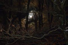 Måne i natten Royaltyfria Bilder