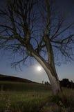 Måne i perigeum Arkivbilder