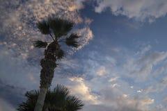 Måne på dramatisk solnedgånghimmel med moln Palmträd mot sup Royaltyfria Foton