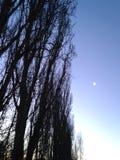 Måne på mitt hus Arkivfoton