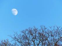 Måne som är synlig ovanför träd under dag arkivfoton