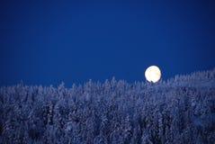 Måne som vilar på överkanten av träd royaltyfri bild