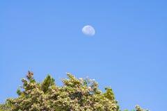 Måne under den mitt- morgonen Arkivfoton