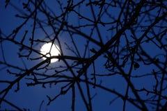 Månebakgrund Arkivfoto