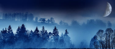 Månedimma och en skog royaltyfri fotografi