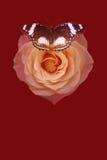 Månefjäril med den röda rosen Arkivfoto
