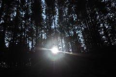 Måneljus och mörkernattskog royaltyfria foton