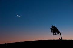 Månen ovanför ett träd Arkivbild